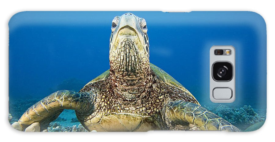 Animal Art Galaxy S8 Case featuring the photograph Hawaii, Green Sea Turtle by Dave Fleetham - Printscapes