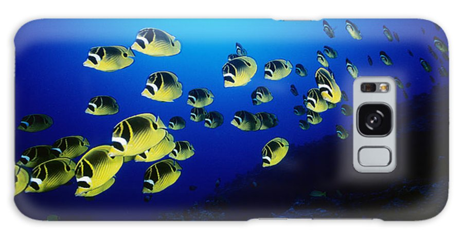 Animal Art Galaxy S8 Case featuring the photograph Raccoon Butterflyfish by Dave Fleetham - Printscapes