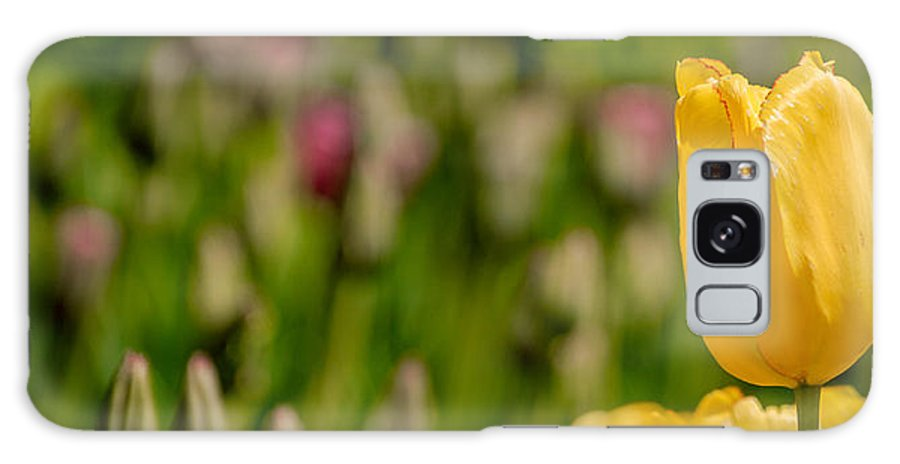 Canada Galaxy S8 Case featuring the photograph Tulips At Ottawa Tulips Festival by Aqnus Febriyant