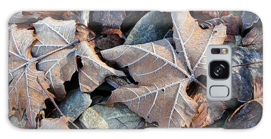 Leaf Galaxy Case featuring the photograph Untitled by Kathy Schumann