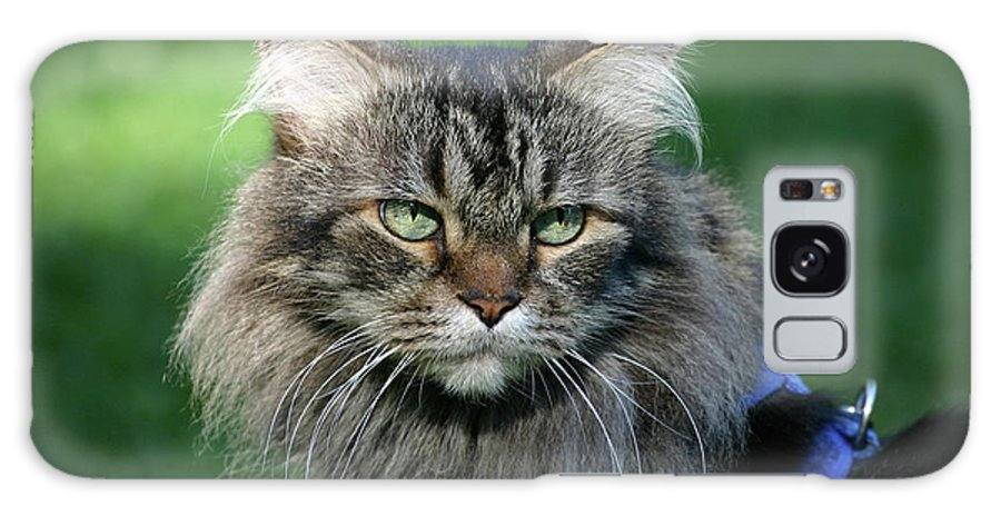 Maine Coon Galaxy S8 Case featuring the photograph Maine Coon by Michael Munster