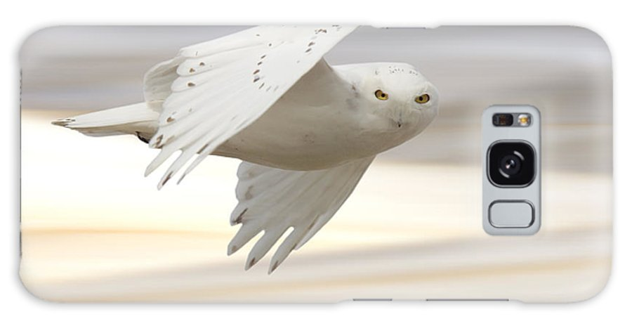 Owl Galaxy S8 Case featuring the photograph Snowy Owl In Flight by Mark Duffy
