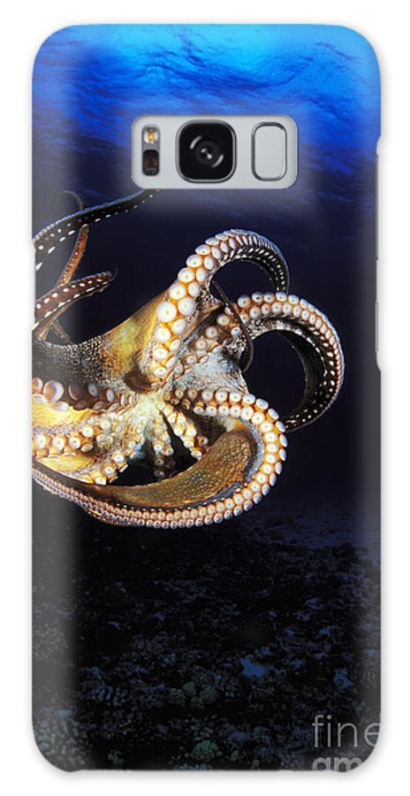 Animal Art Galaxy S8 Case featuring the photograph Hawaii, Day Octopus by Dave Fleetham - Printscapes