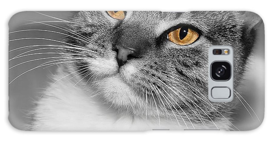 Cat Galaxy S8 Case featuring the photograph Hi by Joyce Baldassarre