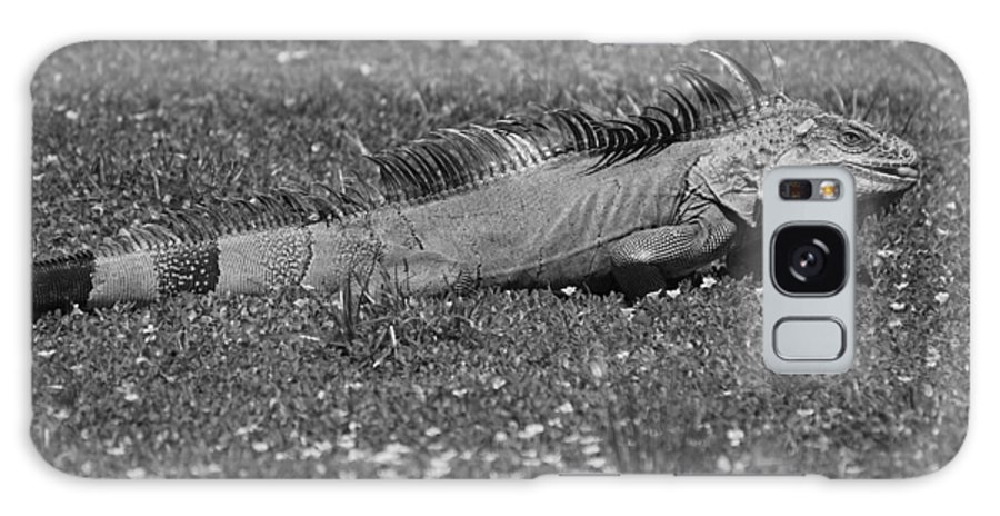 Sun Galaxy S8 Case featuring the photograph I Iguana by Rob Hans