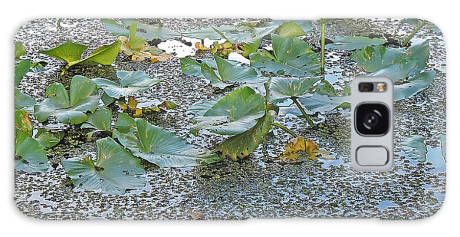 Swamp Galaxy S8 Case featuring the photograph 6 Mile Swamp by Kenneth Albin