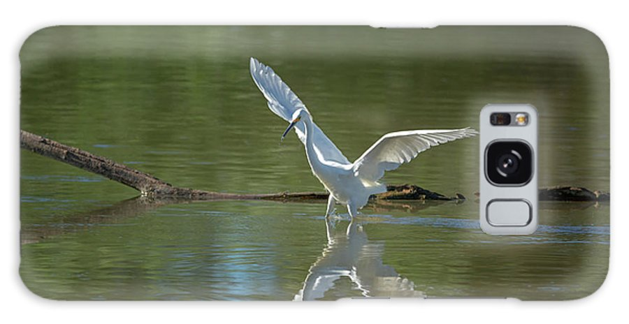 Snowy Galaxy S8 Case featuring the photograph Snowy Egret by Tam Ryan