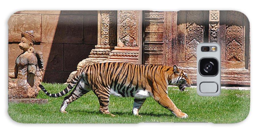 Sumatran Tiger Galaxy S8 Case featuring the photograph 61- Sumatran Tiger by Joseph Keane