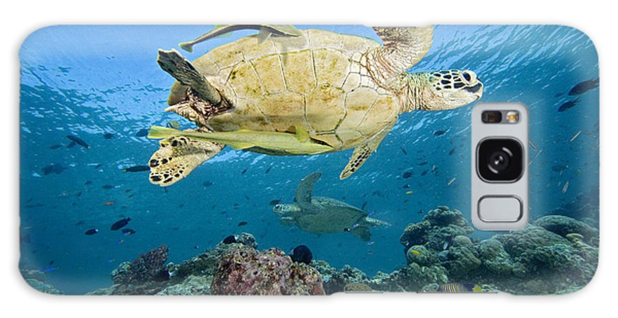 Animal Art Galaxy S8 Case featuring the photograph Green Sea Turtle by Dave Fleetham - Printscapes