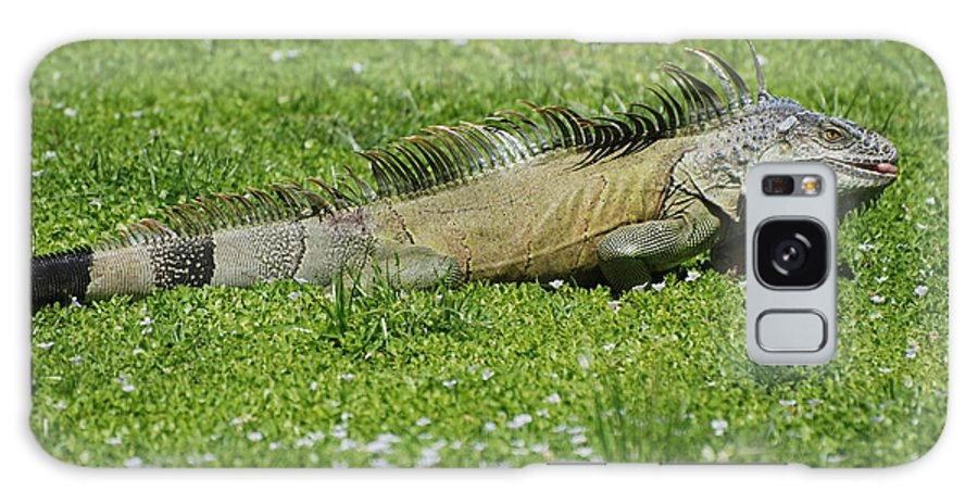 Macro Galaxy S8 Case featuring the photograph I Iguana by Rob Hans