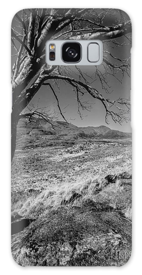 Amazing Galaxy S8 Case featuring the photograph Old Tree by Ulisse Bart