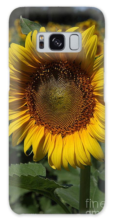 Sunflowers Galaxy S8 Case featuring the photograph Sunflower Series by Amanda Barcon