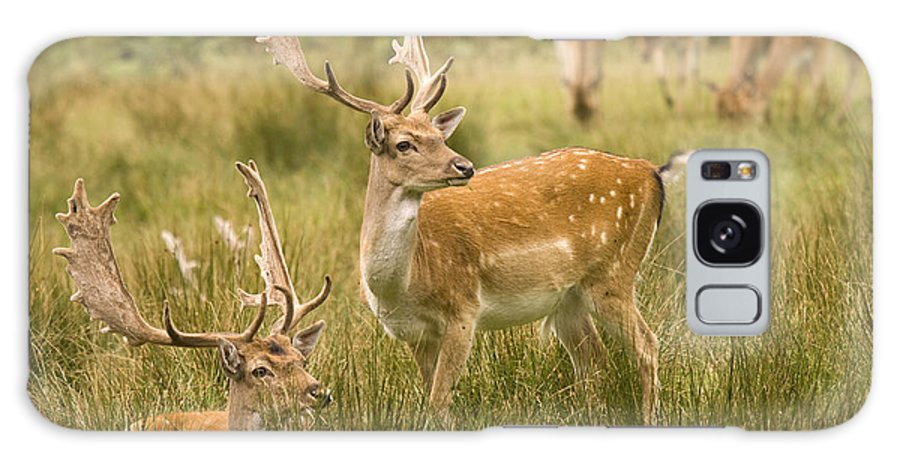 Fallow Deer Galaxy S8 Case featuring the photograph Fallow Deer by Angel Ciesniarska
