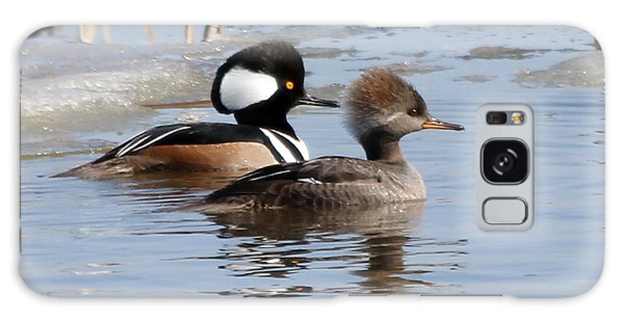 Hodded Galaxy S8 Case featuring the photograph Hooded Merganser by Lori Tordsen