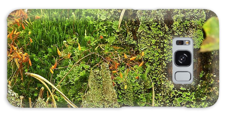 Moss Galaxy S8 Case featuring the photograph Mosses And Liverworts 8861 by Michael Peychich