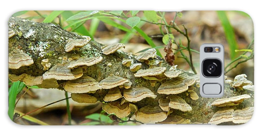 Polypores Galaxy S8 Case featuring the photograph Polypores 9155 by Michael Peychich