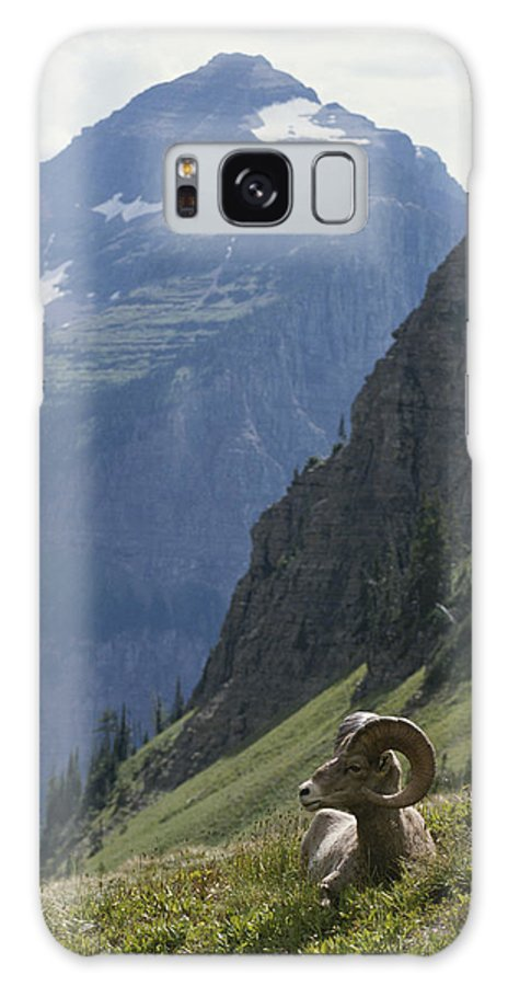North America Galaxy S8 Case featuring the photograph A Bighorn Sheep Ram, Ovis Canadensis by Tom Murphy