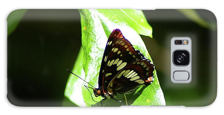 Butterfly Galaxy S8 Case featuring the photograph A Butterfly In The Sun by Jeff Swan