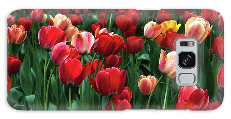 Tulip Galaxy S8 Case featuring the photograph A Field Of Tulips by Kathleen Kent