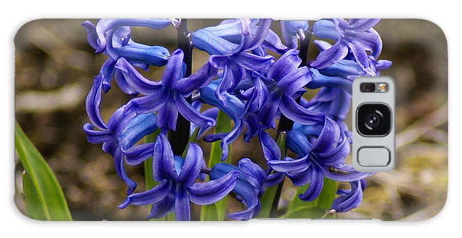 Flowers Galaxy S8 Case featuring the photograph A Gathering Of Blues by Ben Upham III