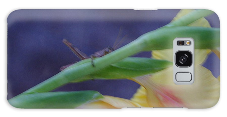 Glads Galaxy S8 Case featuring the photograph A Glad Hopper by Debbie May