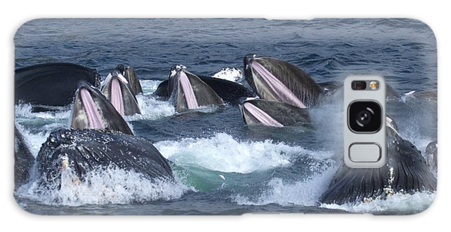 Pacific Ocean Galaxy S8 Case featuring the photograph A Group Of Humpback Whales Bubble Net by Ralph Lee Hopkins