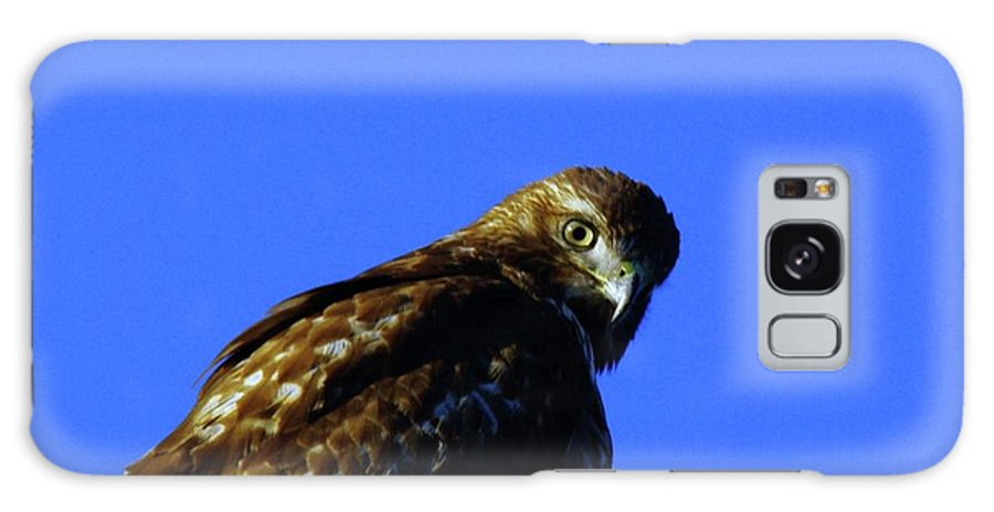 Hawks Galaxy S8 Case featuring the photograph A Hawk Looking Back by Jeff Swan