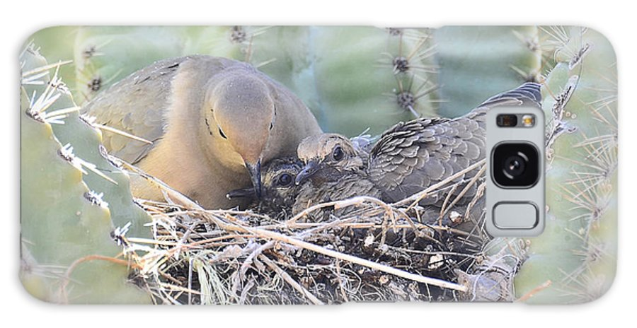 Mourning Dove Galaxy S8 Case featuring the photograph A Mother's Love by Saija Lehtonen