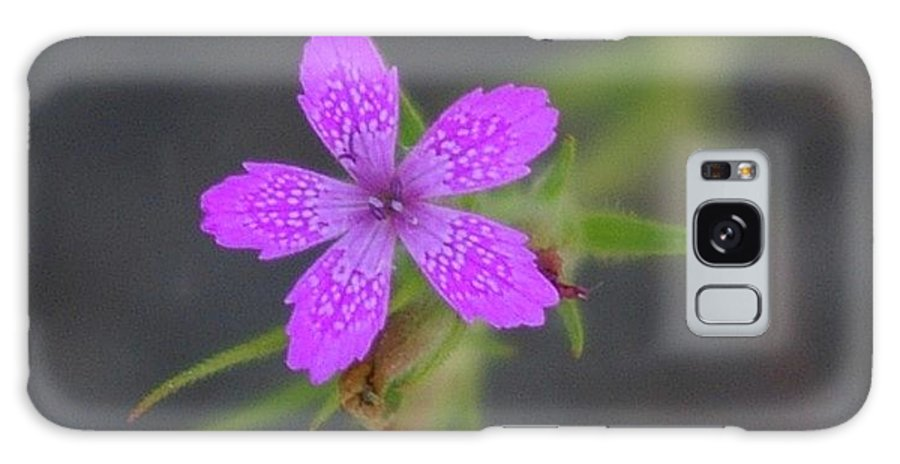 Floral Galaxy S8 Case featuring the photograph A Perky Little Blossom by Jeff Swan