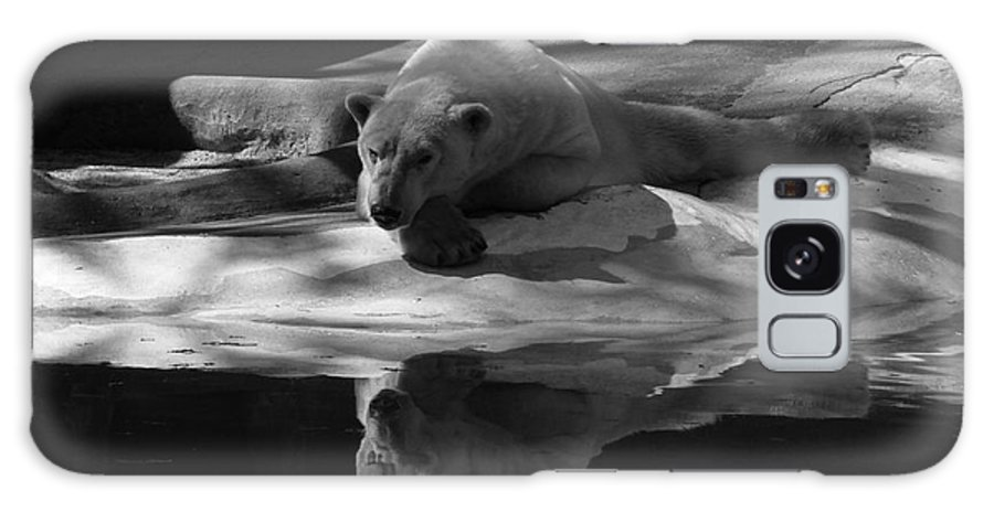 Bear Galaxy S8 Case featuring the photograph A Polar Bear Reflects by Karol Livote