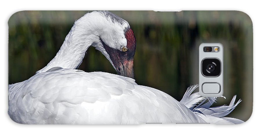 Avian Galaxy Case featuring the photograph A Preening Whooping Crane by Al Mueller