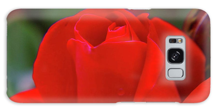 Roses Galaxy S8 Case featuring the photograph A Red Rose Unfolding by Jeff Swan