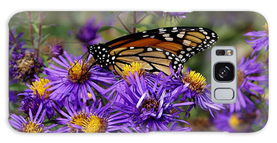 Butterfly Galaxy S8 Case featuring the photograph A Rest Above by Debbie May