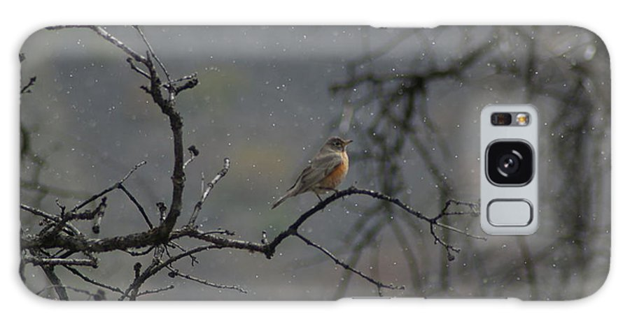 Fowl Galaxy S8 Case featuring the photograph A Robin In Spring Snowfall by Jeff Swan