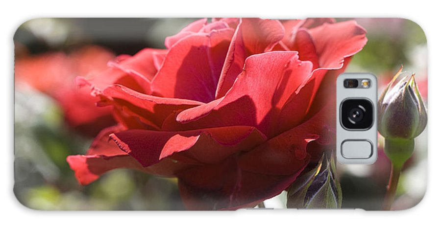 Red Galaxy S8 Case featuring the photograph A Rose By Any Other Name-- by Carl Purcell