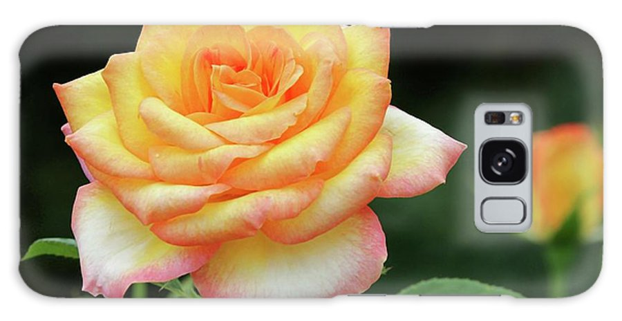 Rose Galaxy S8 Case featuring the photograph A Rose Is A Rose by Sabrina L Ryan