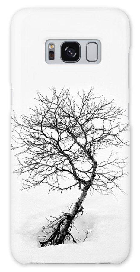 One Tree Galaxy S8 Case featuring the photograph A Simple Tree by Dave Bowman