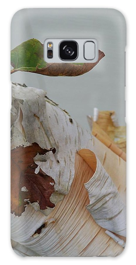 Birch Galaxy S8 Case featuring the photograph A Touch Of Fall by Gale Cochran-Smith