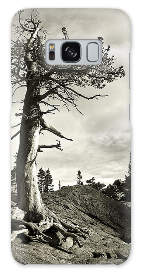 Tree Galaxy S8 Case featuring the photograph A Tough Life by Marilyn Hunt
