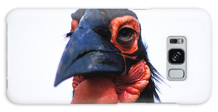 Horn Bill Galaxy S8 Case featuring the photograph A Very Ugly Bird by Carl Purcell