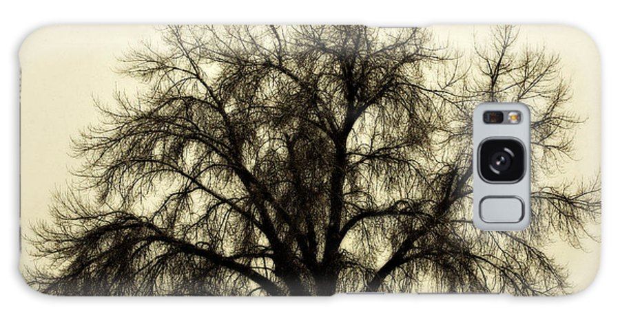 Tree Galaxy Case featuring the photograph A Winter's Day by Marilyn Hunt