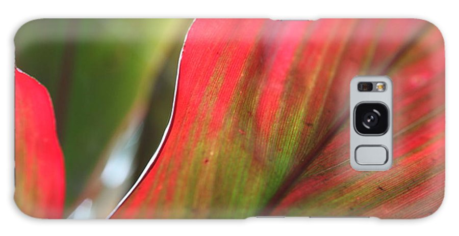 Pink Galaxy Case featuring the photograph Abstract Leaves by Nadine Rippelmeyer