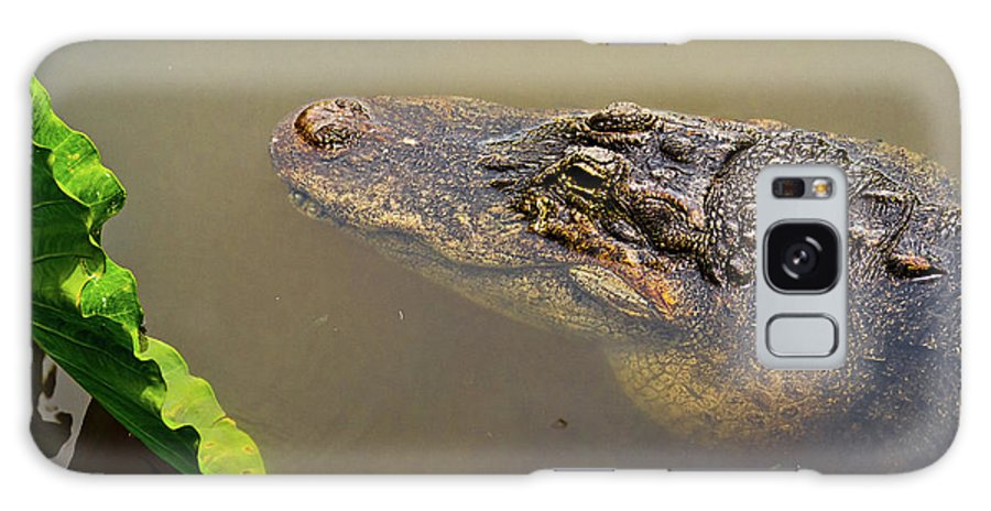 Alligator Galaxy S8 Case featuring the photograph Admiring The Leaf by Christopher Holmes
