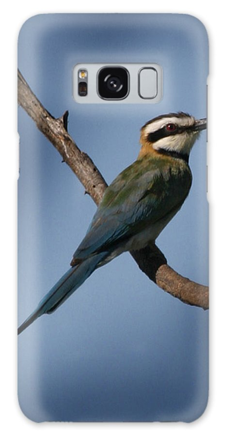 Bee Eater Galaxy S8 Case featuring the photograph African Bee Eater by Joseph G Holland