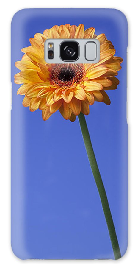 Daisy Galaxy S8 Case featuring the photograph African Daisy by Peter Coombes