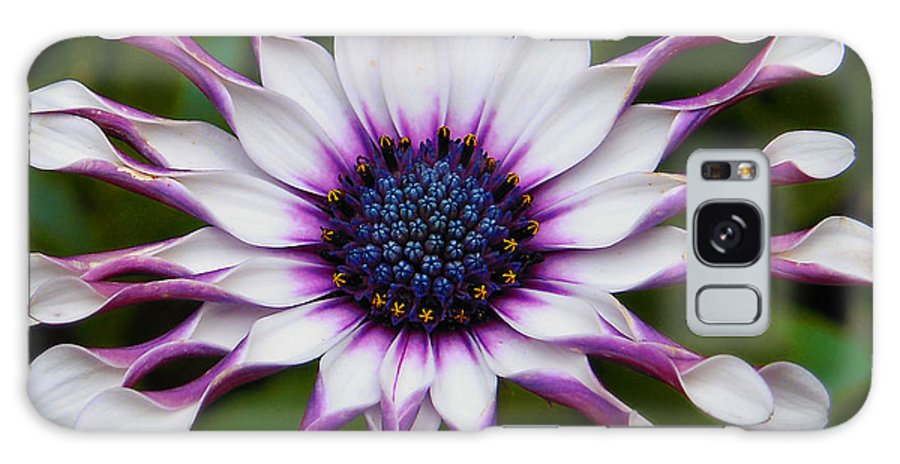 African Galaxy S8 Case featuring the photograph African Daisy by Svetlana Sewell