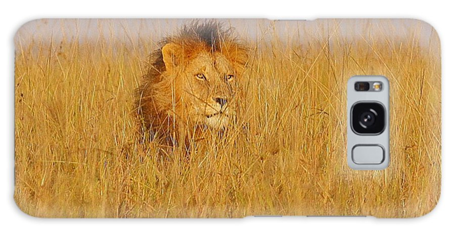 Africa Kenya Wildlife Lion Masaimara Galaxy S8 Case featuring the photograph African Lion by Quazi Ahmed Hussain
