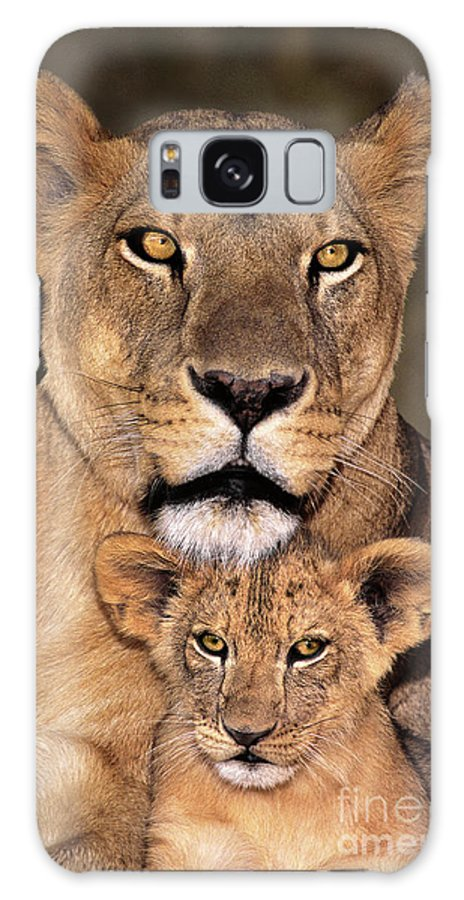 African Lion Galaxy S8 Case featuring the photograph African Lions Parenthood Wildlife Rescue by Dave Welling