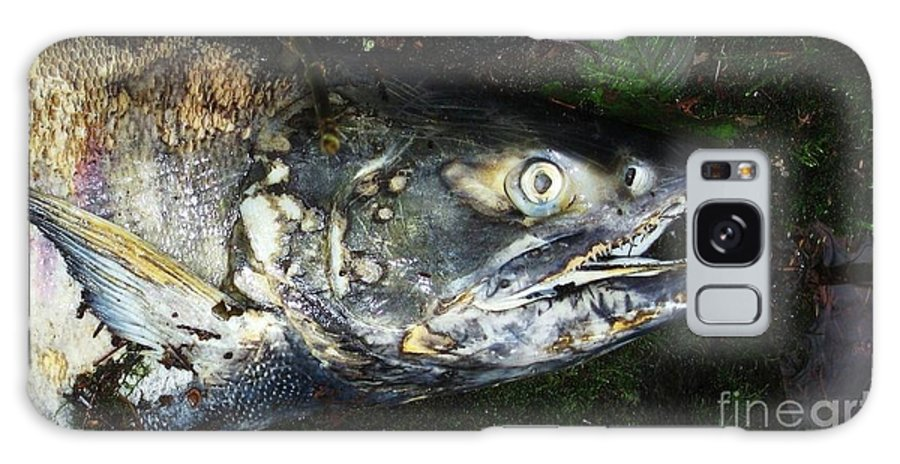 Photography Salmon Death Fish River Malahat Hatch Galaxy S8 Case featuring the photograph After Death by Seon-Jeong Kim