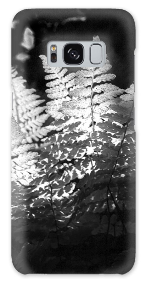 Fern Galaxy Case featuring the photograph After Glow by Randy Oberg